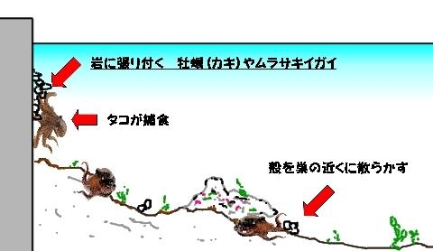 タコの捕食 Web 表示用 (中).jpg